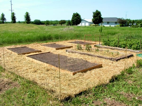 The Growing Garden: Raised Beds