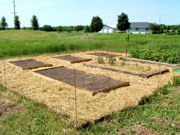 The Growing Garden: Raised Beds