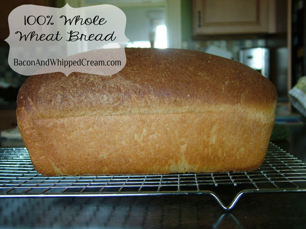 100% Whole Wheat Brad - Bacon & Whipped Cream