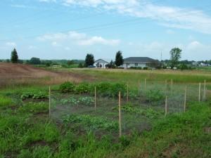 2006-07-14-GARDEN-1